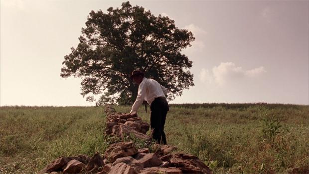 shawshank-tree